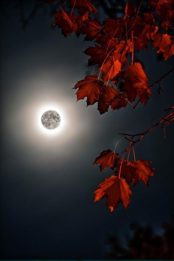 good night image video download