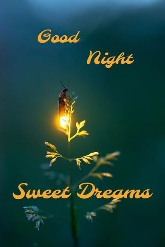 good night image share chat